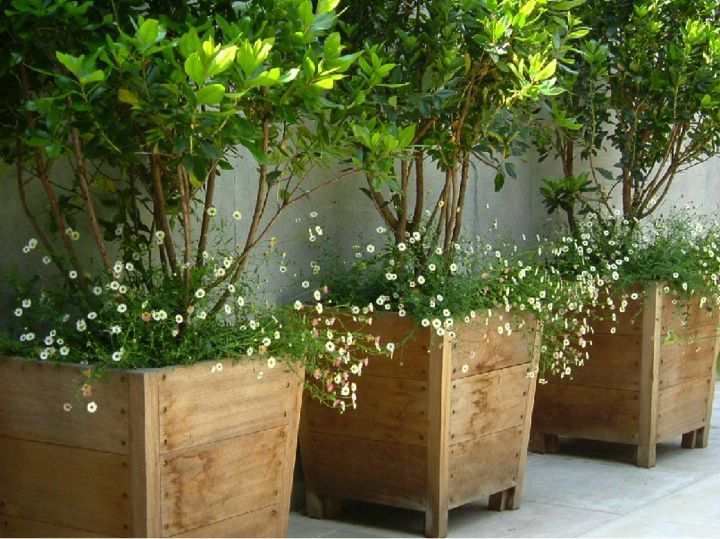 Potted Plant Ideas for Patios and Deck- Amazing Deck